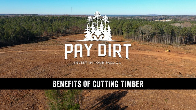 Dig Deeper: Benefits of Cutting Timber