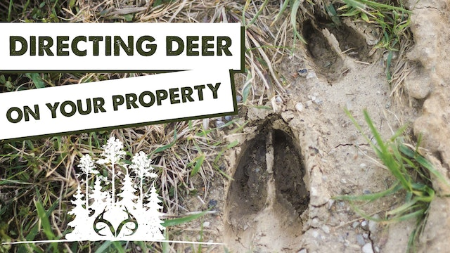 How to Direct Deer Traffic | Land Management Tips for Whitetails | Pay Dirt