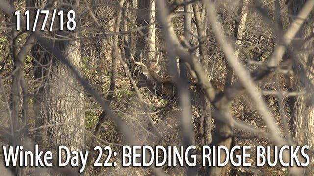Winke Day 22: Big 7- Bedding Ridge Bucks