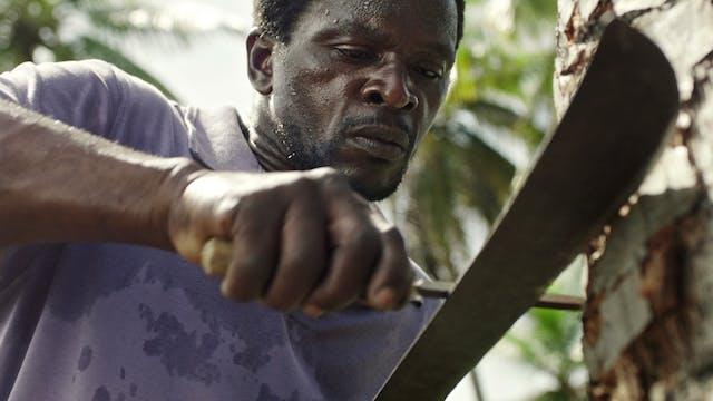 Three Blades Trailer