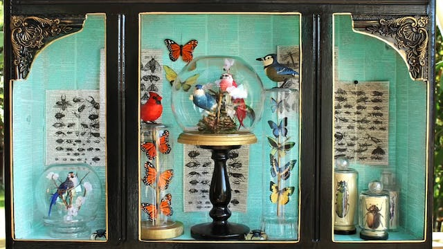 """""""Bird And Butterfly Museum Displays"""""""