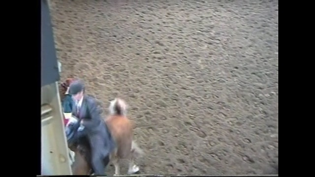 Des Moines Spring Horse Show 1995 - 3 Yr Old 5 Gaited - Amberwood's Star of the Show