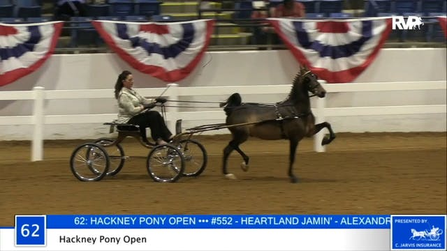 2020 BB - Class 62 Hackney Pony Open