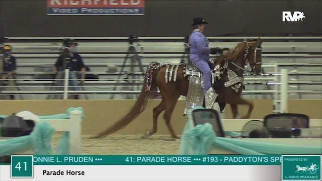 2020 BS - Class 41 Parade Horse