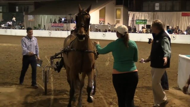 GASP17 - Iamnotacow - Championship