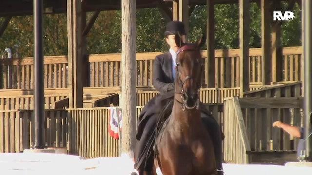 2019 American Saddlebred Horse Association of Virginia - Saturday Night