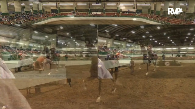 NCSC19 - Class 144 - Undulata's Witch Doctor Championship