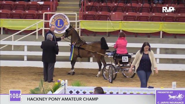 ALCB17 - Hackney Pony Amateur Champio...