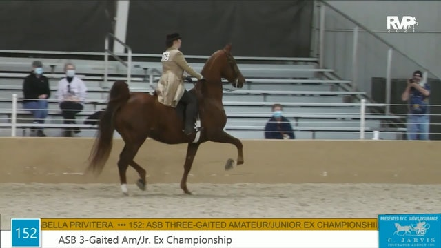 BS21 - Class 152 - ASB Three Gaited Amateur-Junior Exhibitor Championship