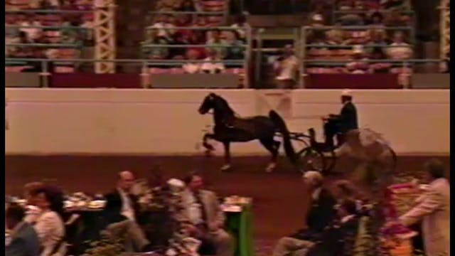 1990 Illinois State Fair - Fine Harne...