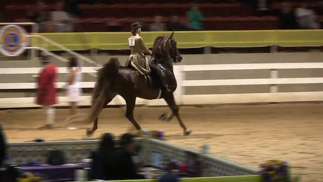 ALCB16 - Five Gaited Amateur Ladies C...