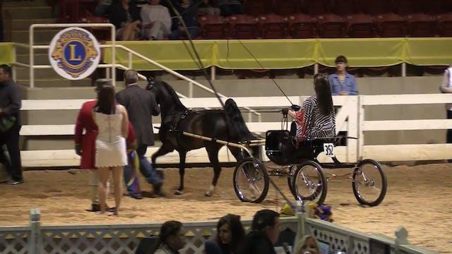 ALCB16 - Harness Pony Championship