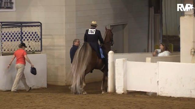 BB16 - Novice Three Gaited Horse
