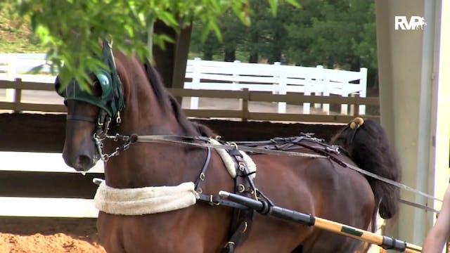 2019 Bonnie Blue National Horse Show ...