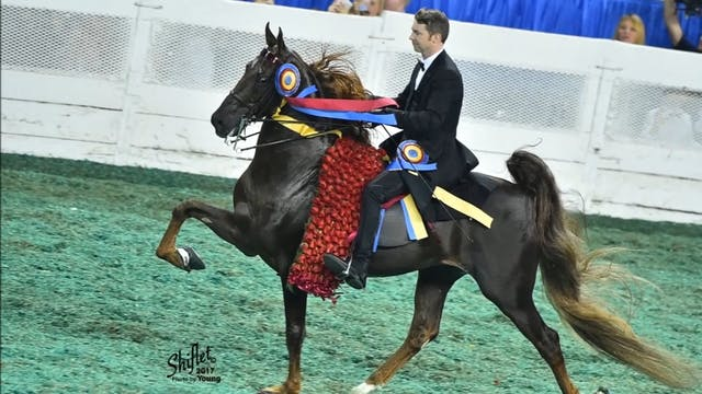 Top of the Mark - ASHA Horse of the Year