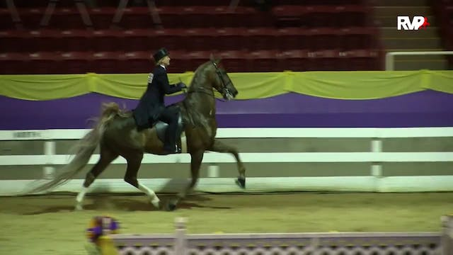 ALCB15 - ASB Three Gaited Ladies