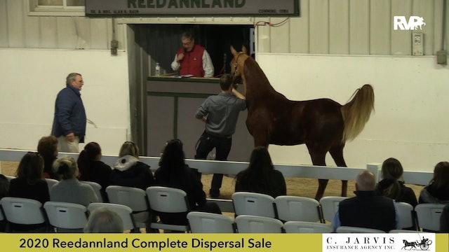 Reedannland Dispersal Sale Preview