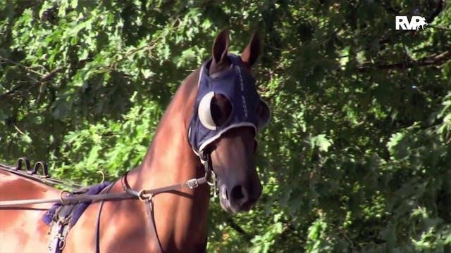 2020 Bridlespur Horse Show - Friday E...