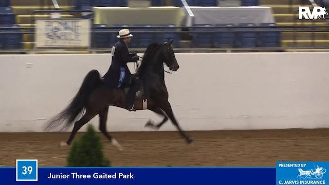 BB16 - Junior Three Gaited Park Horse
