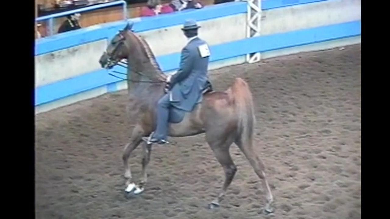 Des Moines Horse Show