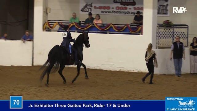 BB16 - Three Gaited Park Horse Jr. Ex...