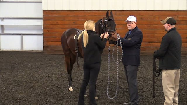 Starting a Horse or Pony -  With Chuc...