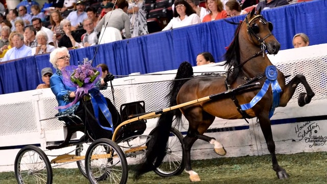 Sandra Surber - AHHS Gwen Stableford  Lifetime Achievement Award