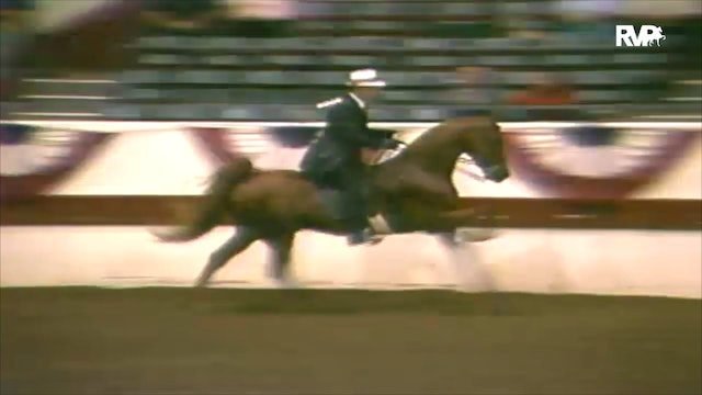 1988 All American Horse Classic Class 195 Three Year Old Three Gaited
