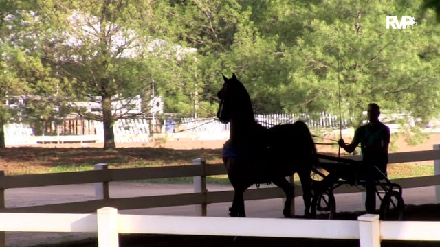 2019 Bonnie Blue National Horse Show - Thursday Evening