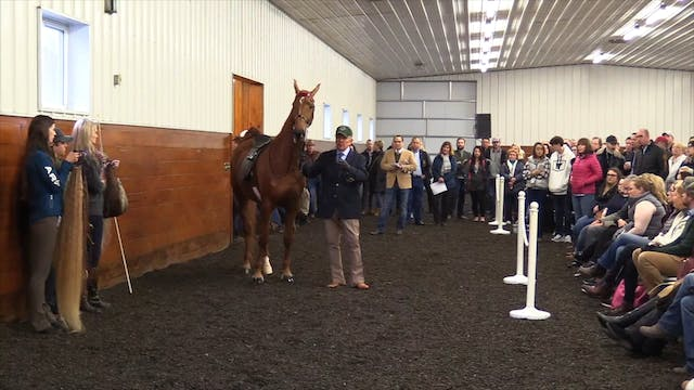 Show Ring Presentation With Nelson Green
