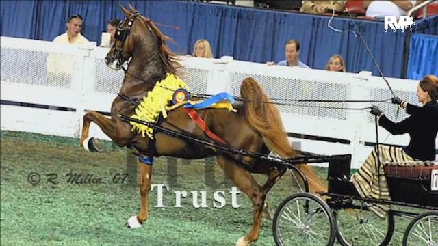 2021 Gasparilla Horse Show - Tuesday Evening