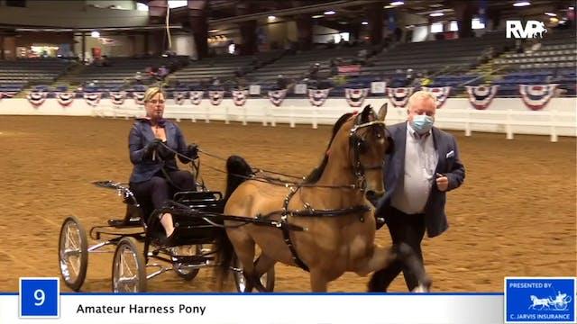2020 BB - Class 9 Amateur Harness Pony