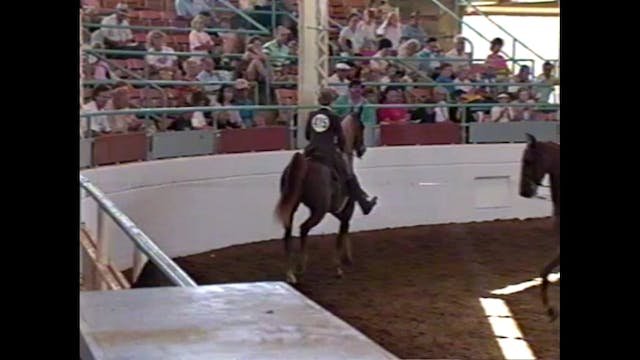 1990 Illinois State Fair - 3 Year Old...