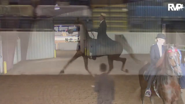 BB16 - National Adult Three Gaited Country Pleasure 41 & Over