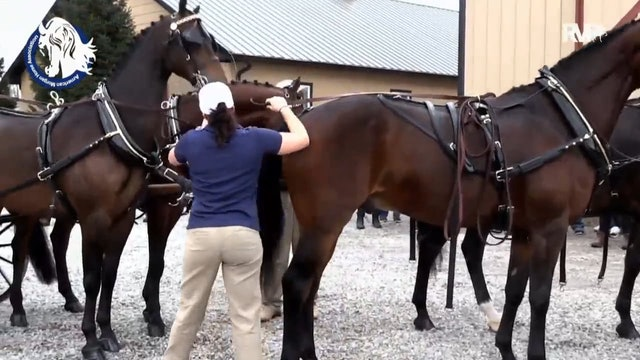 Gasparilla Charity Horse Show 2018 - Thursday