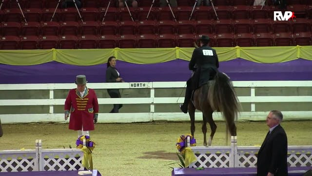 ALCB15 - ASB Three Gaited Over 15.2