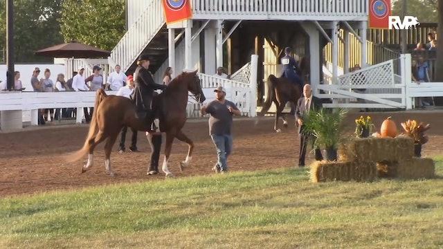 2019 American Saddlebred Horse Association of Virginia - Saturday Morning
