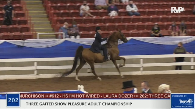 2020 BR - Class 202 Three Gaited Show Pleasure Adult Championship