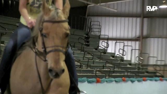 GASP15 - Morning Work at the Gasparilla Charity Horse Show