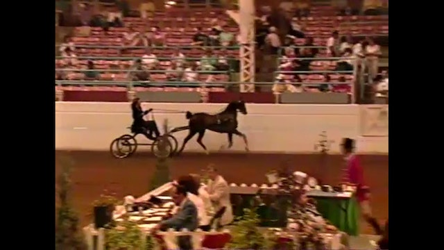 1990 Illinois State Fair - UPHA Classic Stake - Hackney Pony