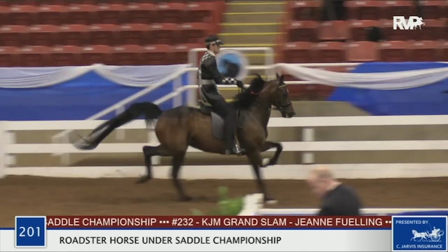 2020 BR - Class 201 Roadster Horse Under Saddle Championship