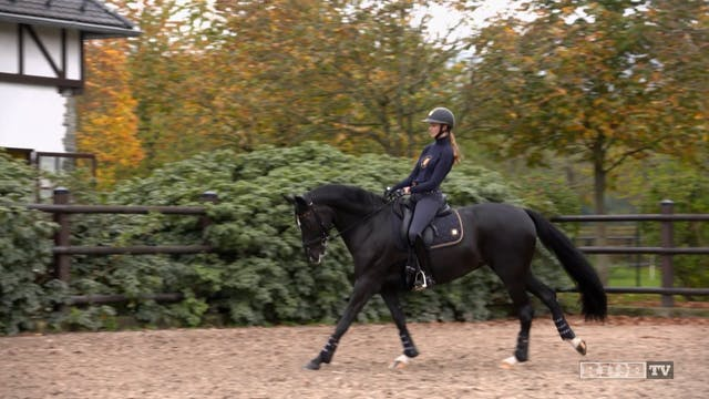 Equestrian World Shorts- Sönke & Sem...