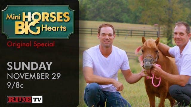 Mini Horses Big Hearts