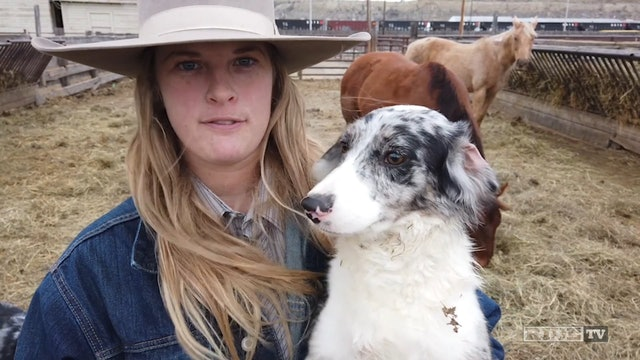 Cowgirls - Brittany Wrangling Cattle
