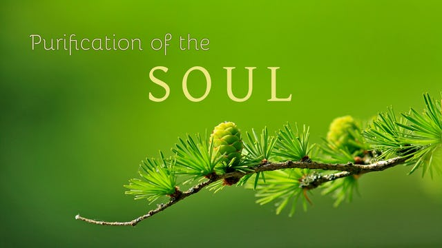 Purification of the Soul - Shaykh Mokthar Maghraoui