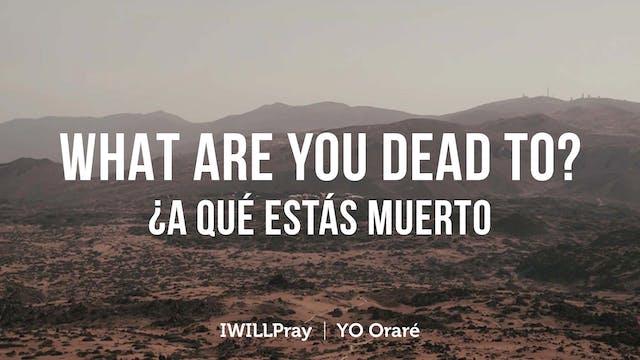 What Are You Dead To? / A Que Estas M...
