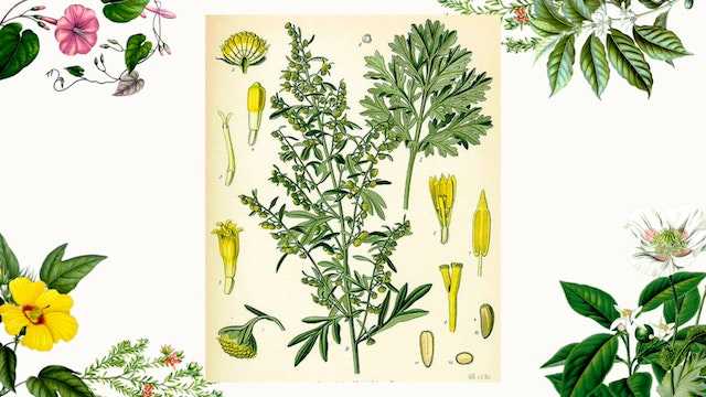 Herb Magic Lesson 10: Wormwood