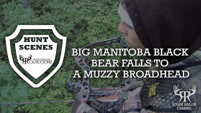 Manitoba Black Bear Falls to a Muzzy • Hunt Scenes