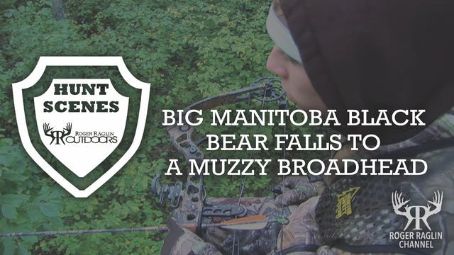 Manitoba Black Bear Falls to a Muzzy ...