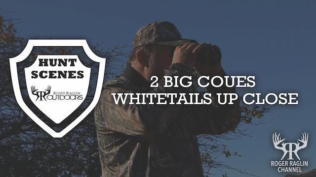 2 Big Coues Whitetails Up Close • Hunt Scenes